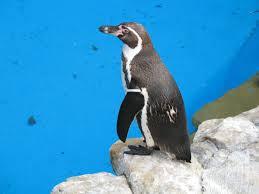 Keresőmarketing + Pingvin?