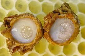 Méhpempő rendelés